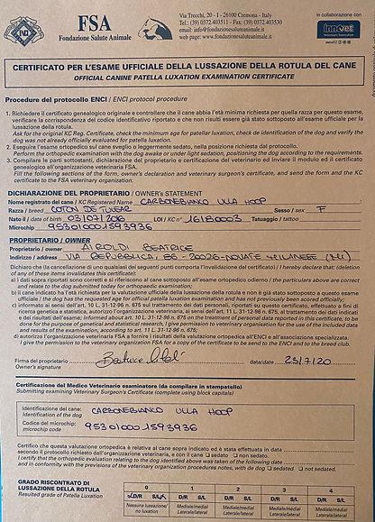 Certificato esame rotula Dolly