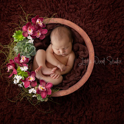 Succulent Garden Newborn Digital Backdrop Hills Newborn Studio