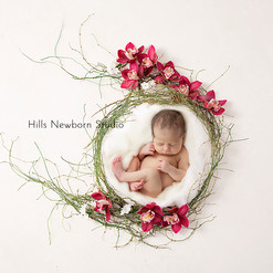 Natures Orchid Nest Newborn Digital Backdrop