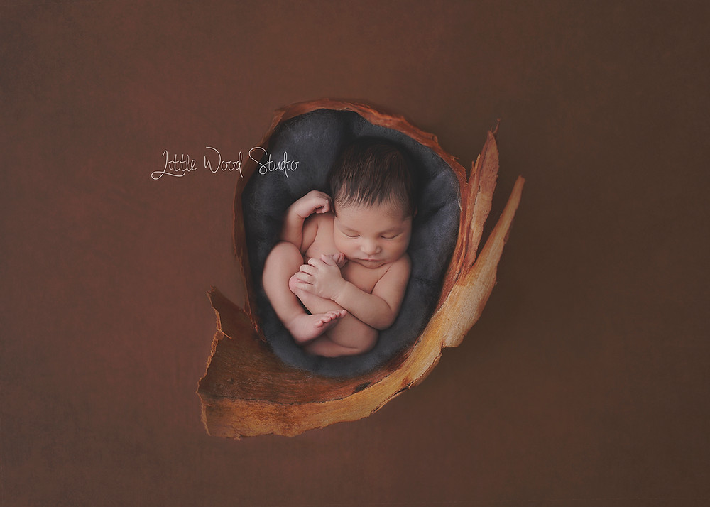 Posed Newborn Sessions
