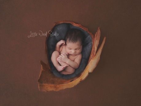 Adelaide Newborn Photographer creates Original Artistic Sets!
