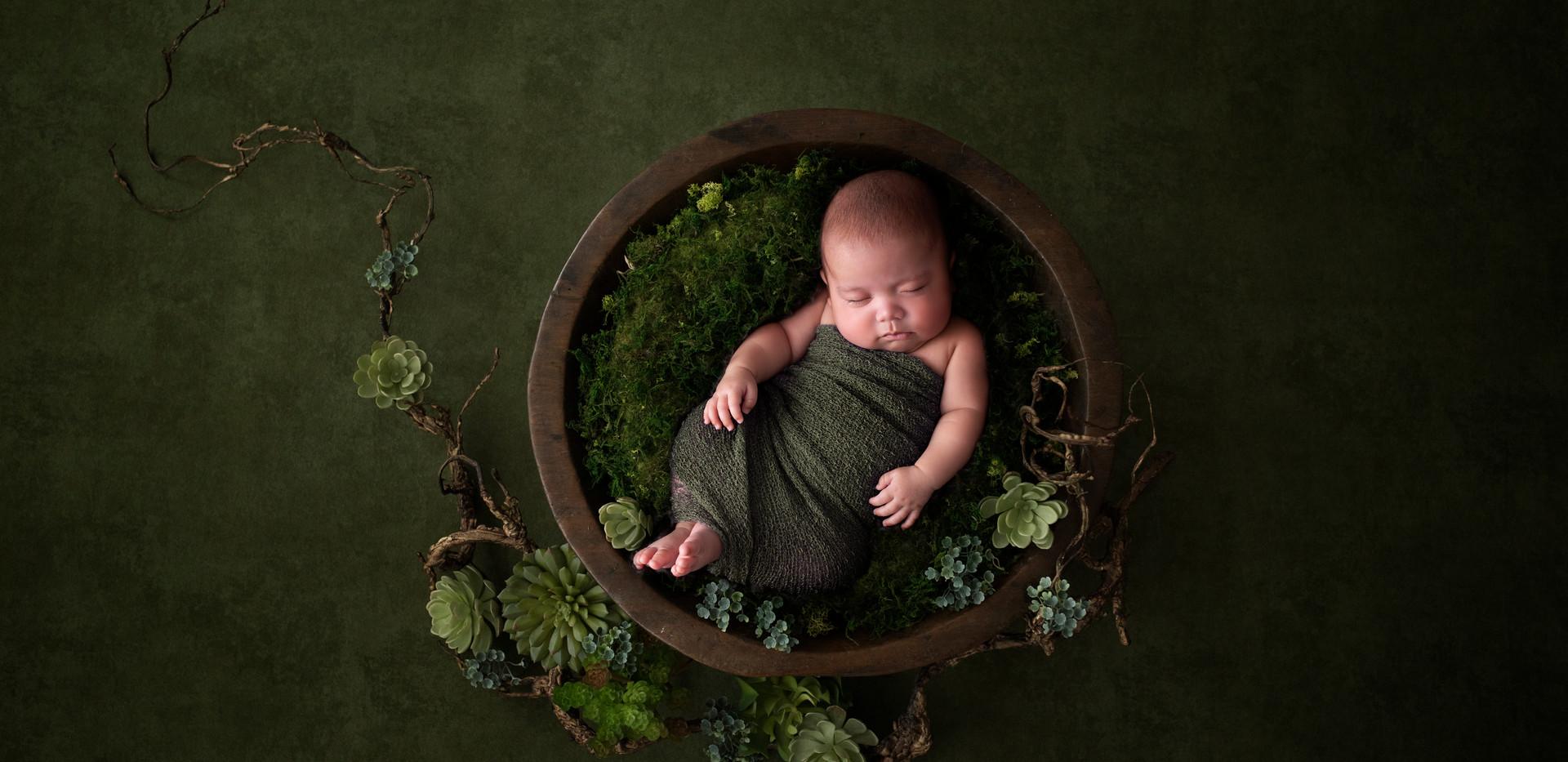 Newborn photography succulentsq
