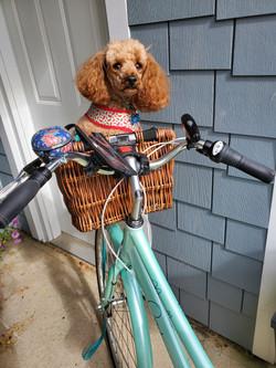 Cycling thru COVID-19-46