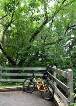 Cycling thru COVID-19-107