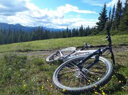 Cycling thru COVID-19-33