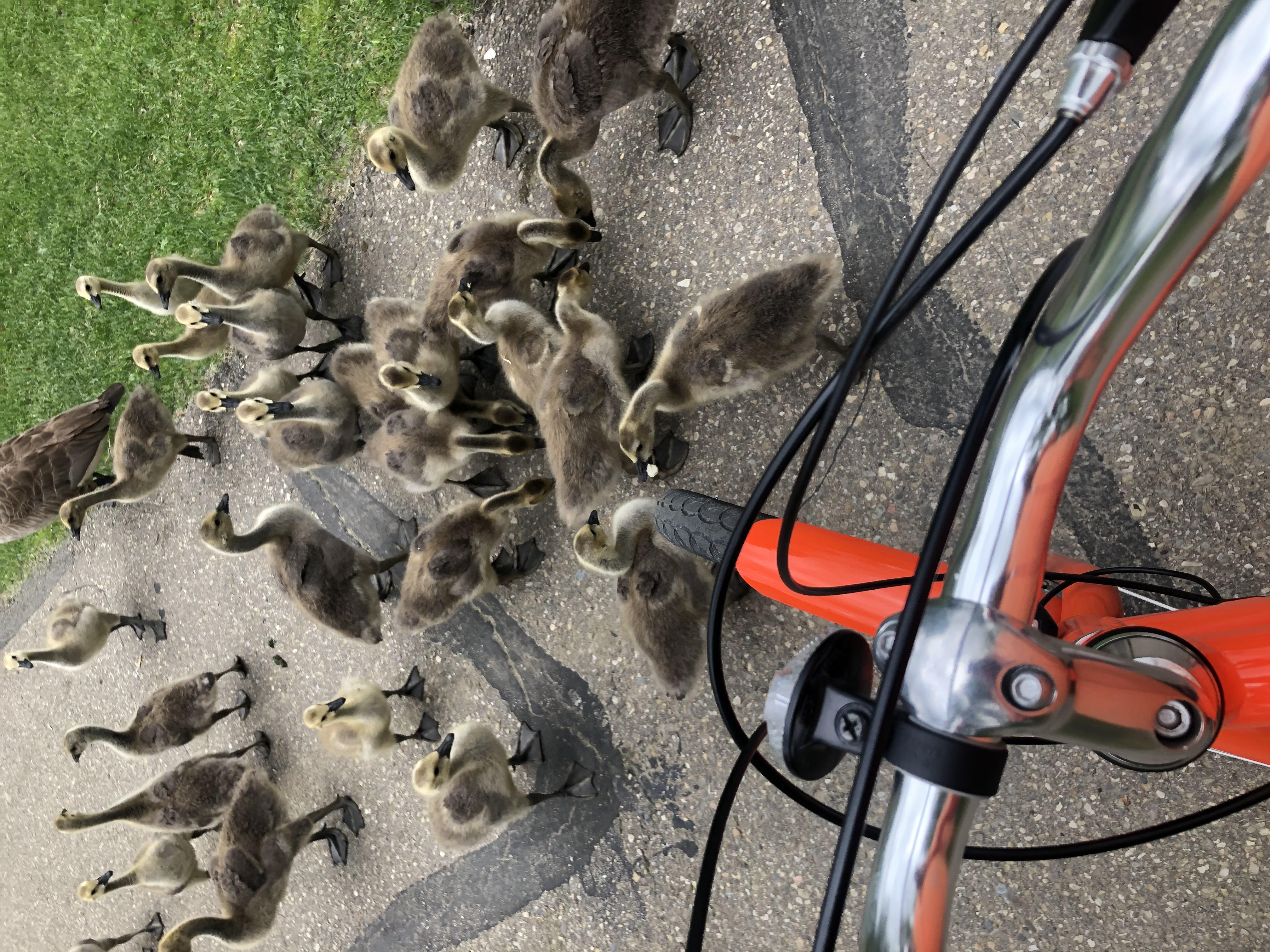 Biking thru COVID-19-11
