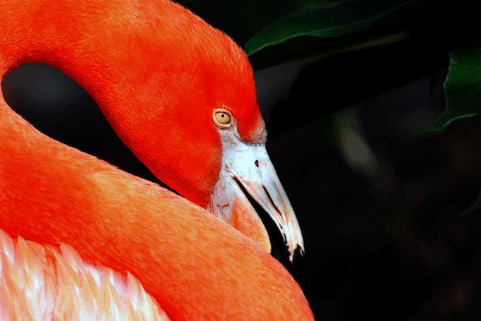 flamingo2.png