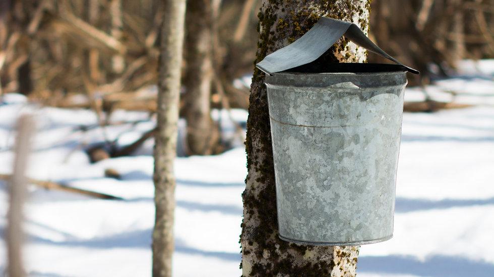 Bucket on tree_edited.jpg