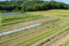 20180719_organic_farm_eb_278.jpg
