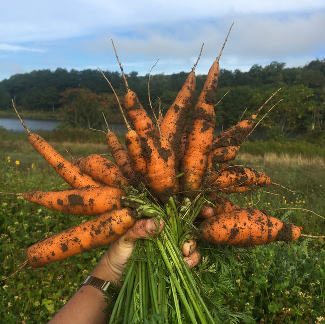 Carrots are tasty