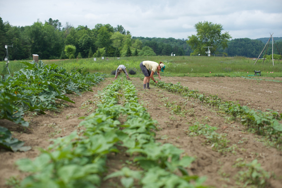 Weeding... the never ending story!