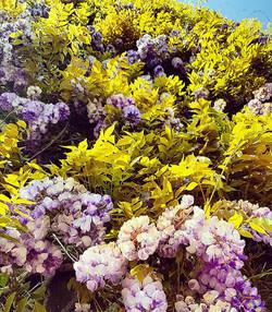 powderham flowers