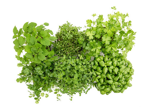 Slegers Selections: Mixed Herbs (6 pack)