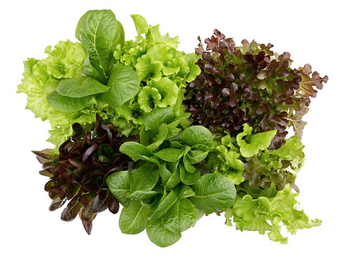 Slegers Selections: Mixed Lettuce (6 pack)