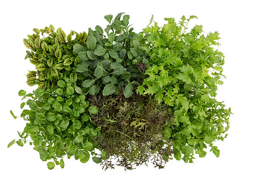 Slegers Selections: Mixed Greens (6 pack)