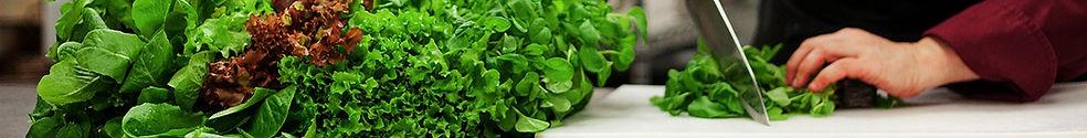 Organic restaurants, chefs, Organic greens, Organic Lettuce, Organic herbs, Organic micros, South Western Ontario, Organic Ontario, living, raw food, lettuce Ontario, Greens Ontario, herbs Ontario, Micros Ontario, healthy, chefs mix, micro mix
