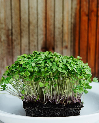 Living Organic, Ontario, Organic, Raw food, Slegers, Greenhouse, Strathroy