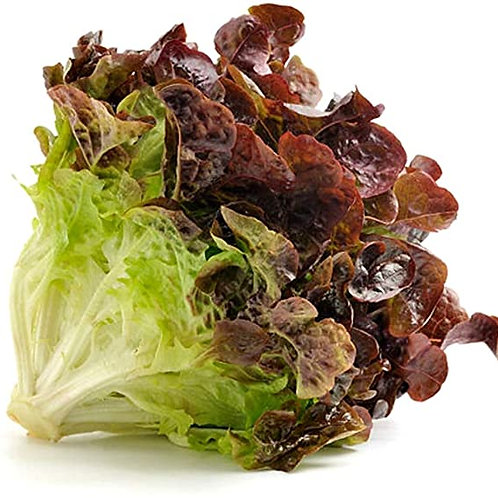 Organic Red Lettuce (By the head)