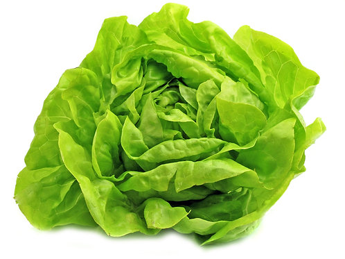 Organic Butterhead Lettuce (By the head)