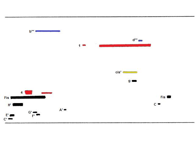 System 3, gefärbt (mit Tonhöhe, erste Hä