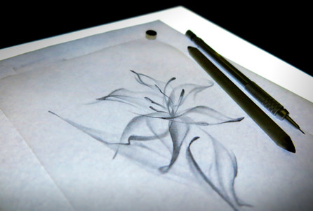 Teesketch-Lily