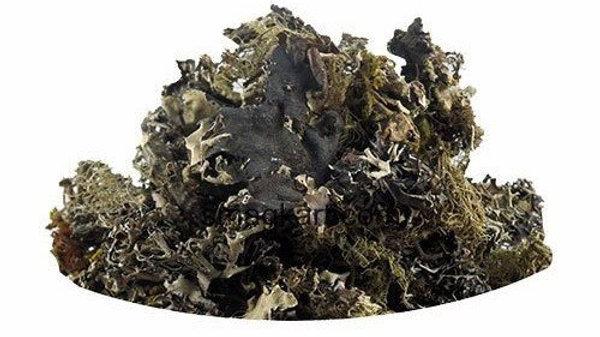 Stone Flower - Edible Algae