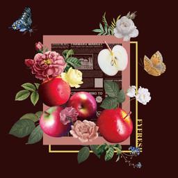 豐益鮮果 | 紐西蘭蘋果