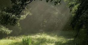 jak voní… cesta trávou