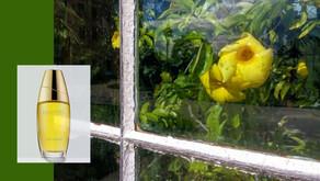 jak voní... zahrada za sklem