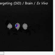 In Vivo Imaging Sample 029.png