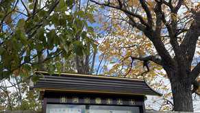 令和3年10月 ヨガと坐禅と写経の会【定員10名・予約制】