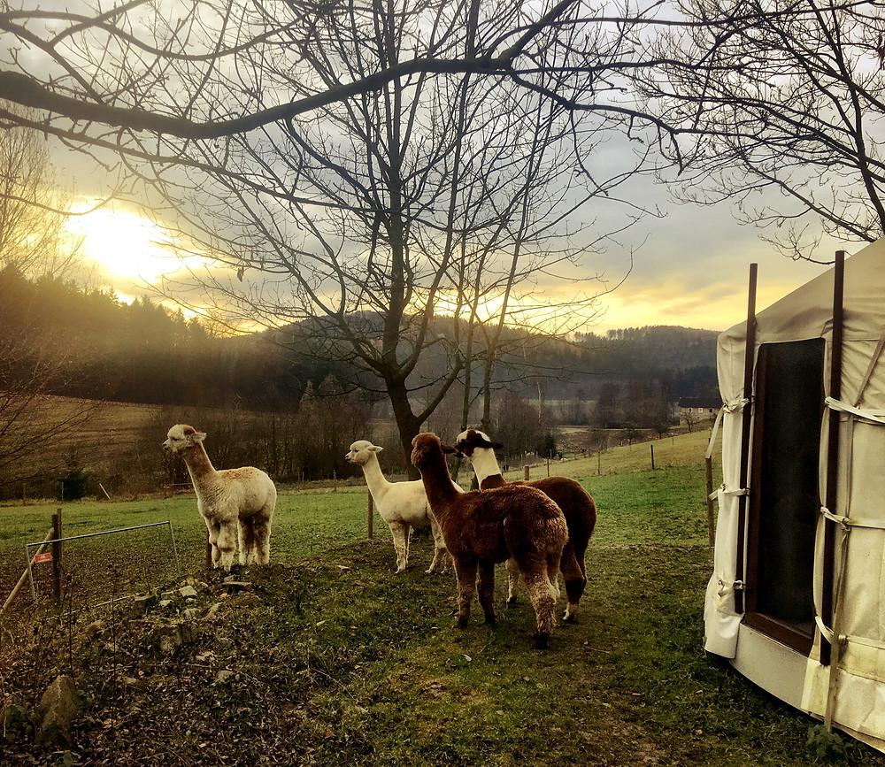 Cria Valley Alpacas