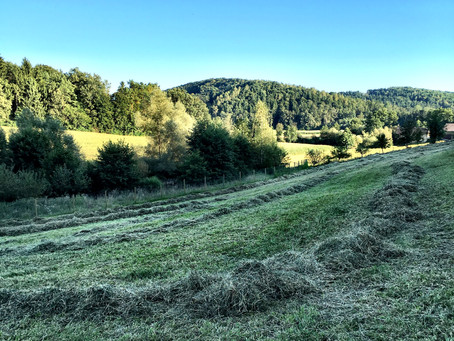 First Time Making Hay