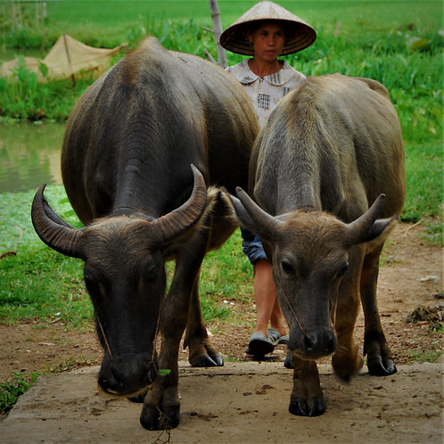 Viet Nam Image Heading 17