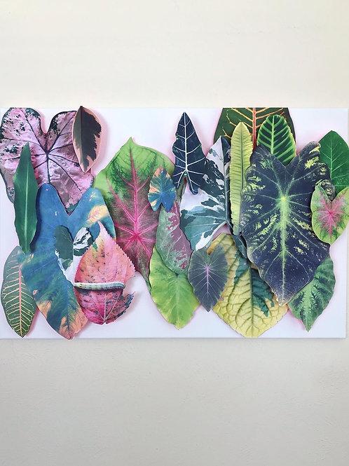 Misc. Jungle