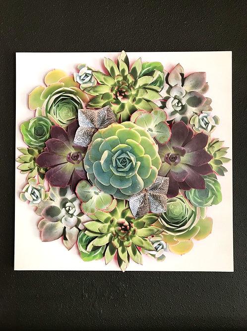 Succulent Mandala II