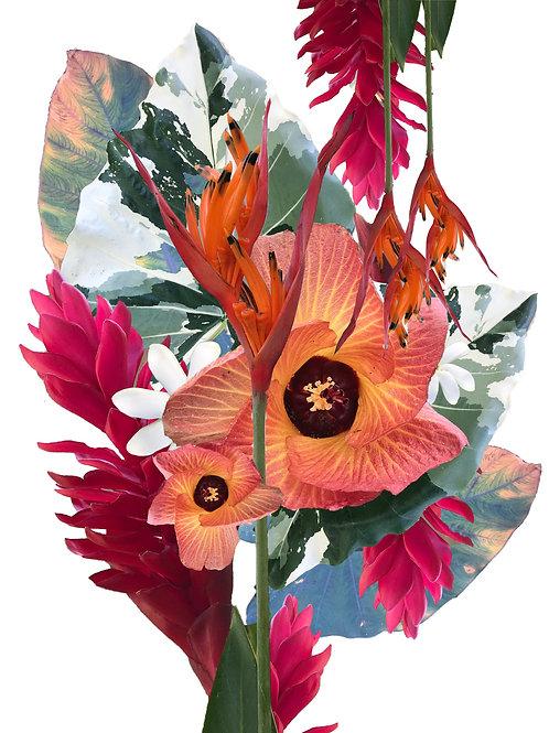 Hawaii Plant life Print