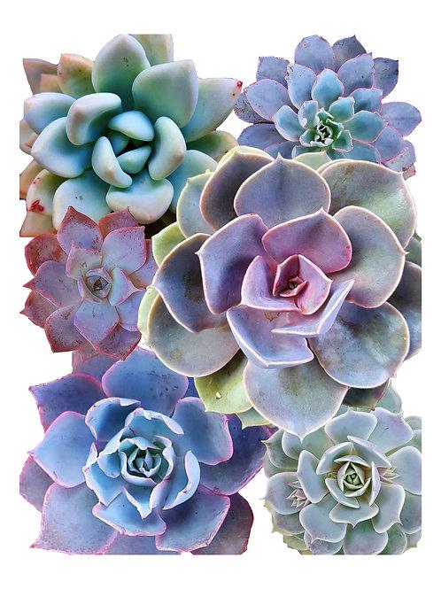 Blue Succulent Print