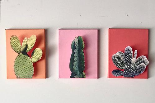 Cacti Triptych