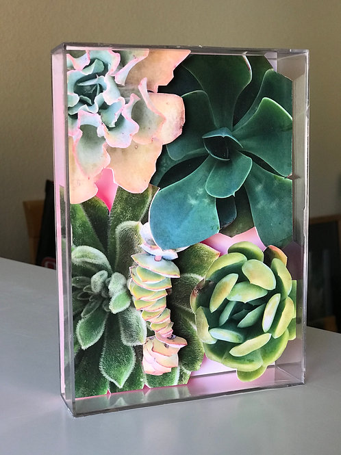 Mini succulent box