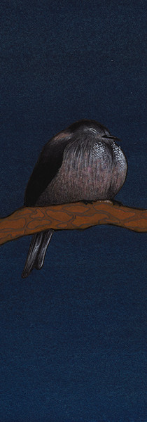 Long-Tailed Tit with a Pine