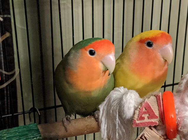Mimosa and Mai Tai