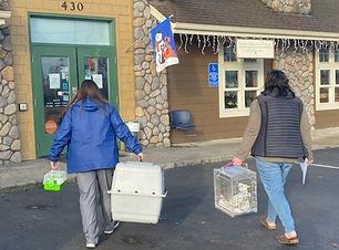 Volunteers bringing birds to the vet