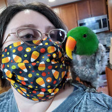 Masked volunteer with Eclectus