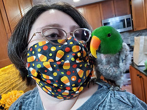 Masked volunteer with Eclectus parrot