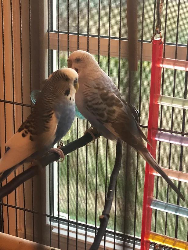 Peanut and Shayera