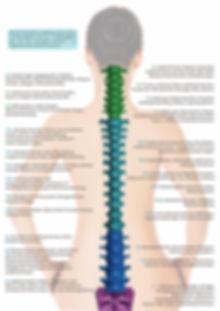 Rhein Chiropraxis - Rückenschemrzen, ISG Blockade, Ischialgie, Schmerzen, Facialis Nerv, Neuralgie, Hexenschuss, HWS Syndrom, LWS Syndrom, BWS, Taubheit, Kopfschmerzen, Tinnitus, Migräne, CMD, Kribbeln, C5, L5, S1