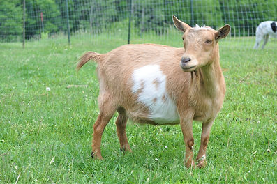 Lil' Rock Farm R Jersey Girl