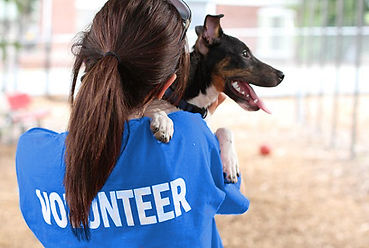 Volunteer with Dog 2.jpg