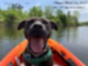Millie on kayak 2.0.jpg